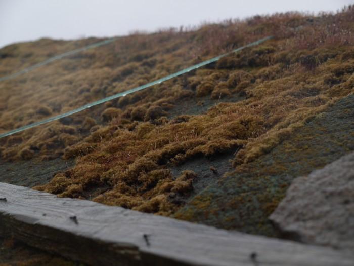 Moss-roof